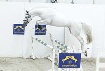 Darthus / 2008 Stallion by Mr Blue x Calvin Z x Zeus KWPN Foal book Jumping 1.30m  Owned by North Star