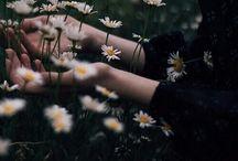 ✧ daisies ✧