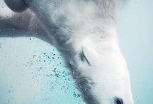 Polar opposites / by Suzie Visser Klander