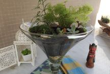 Meus Terrários / Um minimundo de plantas para dar vida sem dar trabalho