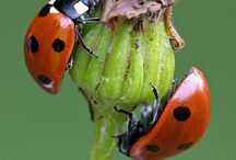 Lady bugs and lightening