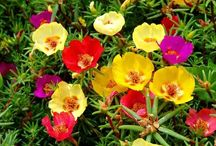 plantas para cestas colgantes