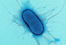 Microbiology / Taking a look under the microscope at the fascinating world of Microbiology