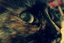 My cute cats