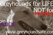 Greyhound Voice