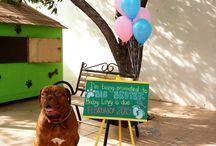 Dogo de burdeos, Dogue de Bordeaux, Frenchmastiff, Dogs, Pets / Dogo de burdeos, Dogue de Bordeaux, Frenchmastiff
