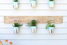 Plantas y mini jardines