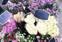 :: bloom + grow ::