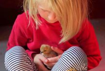 Keeping Backyard Chickens / Get started with your backyard flock! Choose breeds for your needs, discover innovative coop designs and get your whole family involved in keeping chickens.