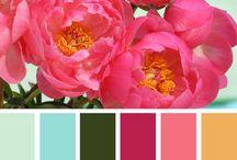 Color Palletes & Paints