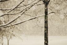 Winter / by Michelle Mierzejewski