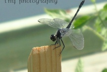 Dragonfly ♥ Love / Deep in the sun-searched growths the dragonfly. Hangs like a blue thread loosened from the sky. ~Dante Gabriel Rossetti~