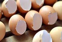 τσοφλι αυγου