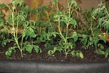 Gardening / Indoor and Outdoor Gardening