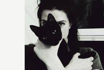 Amores Gatos