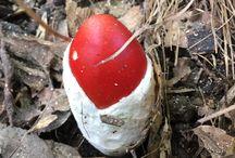 きのこ-mushroom- / 横浜市青葉区 寺家ふるさと村散歩撮影
