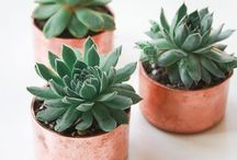{Plant love}