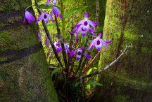 fiori nel paesaggio