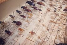 Bowdler's Beetles / Blackburn Museum unveils its collection of Bowdler's Beetles for the first time to celebrate the 100th anniversary of the Collection at Blackburn Museum and Art Gallery.