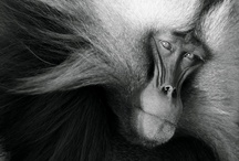 Primate / by Bonnie Koenig