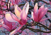 Akvarel magnolie og liljer