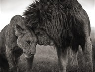 World of Animals / by Tyrone Karamoko