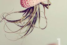 Air Plants / by Kim Caffarelli