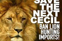 Ban All Hunting
