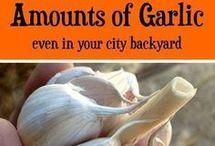 Garlic Planted