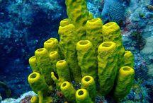 Coral & Sea