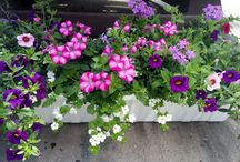 Window Boxes / Add beautiful color, texture and life to your home with window boxes.  Plant annuals for shade, part shade or full sun depending on the location of the boxes.