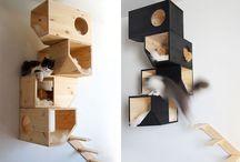 . : Cats : .