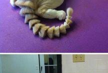 do not cut cats fur