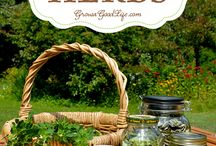 how to harvest n dry herbs n flowers