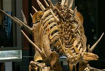 Dinasaur. Bones