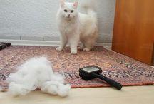 Arif the cat / This is Arif