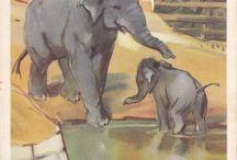 Elephants / by Russian Soul Vintage