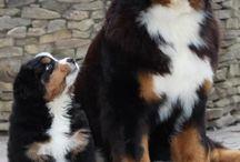 Hundebilder / En mappe med bare søte søte bilder av hunder.