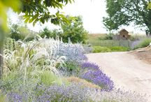 Garden Styles: Sacred Meadow / by PITH + VIGOR