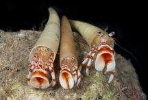 Atlantic biodiversity