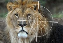 "Stop Canned Hunting! / #FOURPAWSgowild - why we are fighting against this brutal industry The most extreme variety of trophy hunting is ""Canned Hunting"". Most of the victims are lions, which are served to their hunters on a silver platter: The animals are kept in fenced areas and then simply shot."