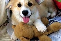 Cuter than cuter