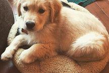 <=> Puppy's