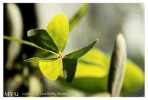 makro & nature