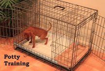 Tito, our new puppy