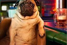 Pug ,Mi futura compañía
