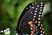 Lovely birds and  butterflies