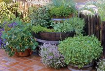 hErbS... / Herbs in the garden and various uses