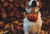 Halloween fancy dress for dogs