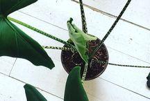 Bijzondere kamerplanten / Deze mooie kamerplanten vergen wat kennis over het onderhoud, maar zijn zo bijzonder dat ze het dubbel en dwars waard zijn!